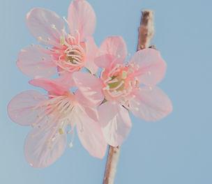 landscape-photography-of-pink-petaled-fl