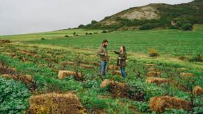 David & Nadie Sadie: meesterlijke wijnen uit Swartland