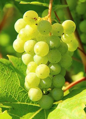 Proefpakket witte wijnen onder de 10 euro