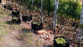 Elgin Ridge - Biologische wijnen uit Elgin