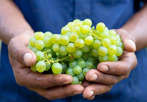 Proef Sauvignon Blanc