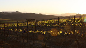 Wijn van de maand mei:  Sarah's Creek, Chardonnay 6.80euro