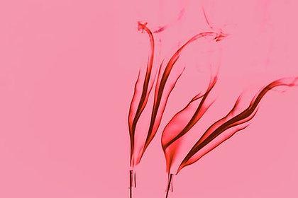 Proefpakket rosé wijnen
