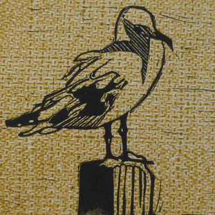 Pigeon on hessian