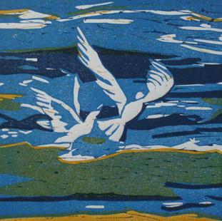 Gulls at midday