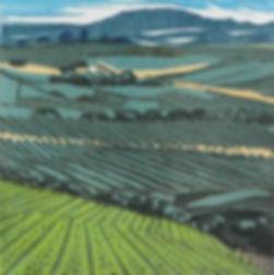 Yarra Valley Wine Region.jpg