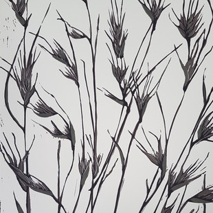 Kangaroo grass (black and white)