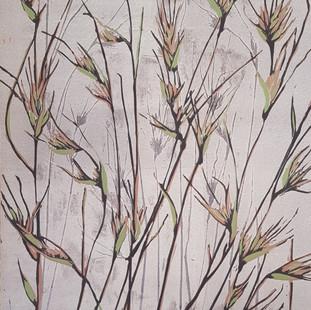 Kangaroo grass (coloured)