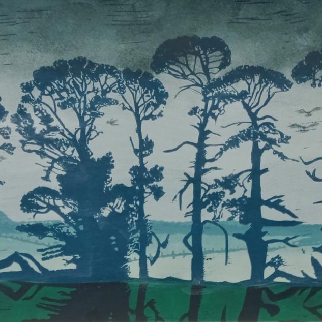 Cypress in blue