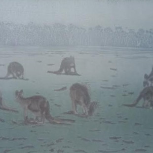 Kangaroos in the mist