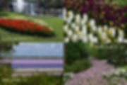 The '4 seasons' of Keukenhof
