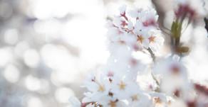 春、来たるまで