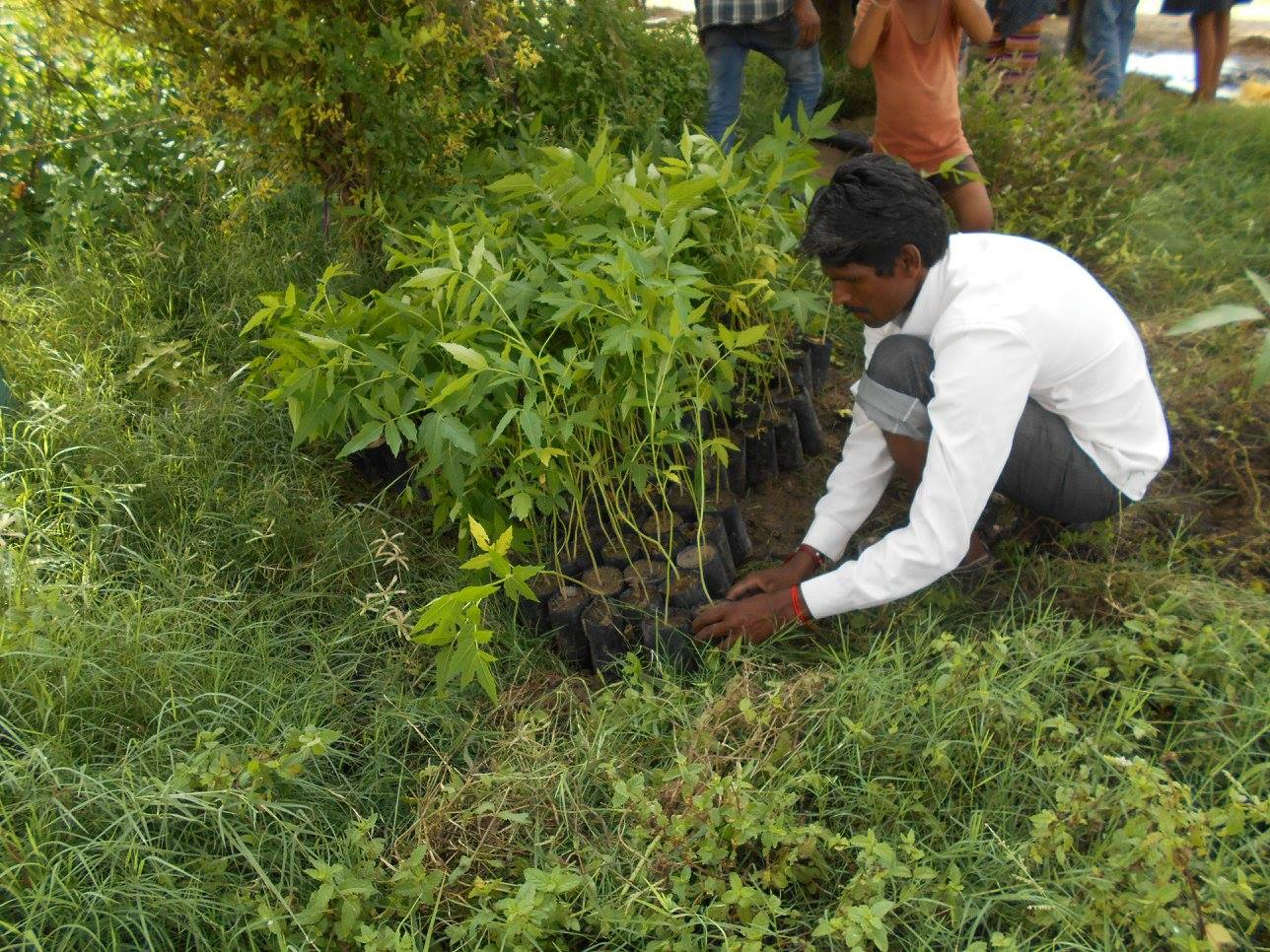Planting efforts begin