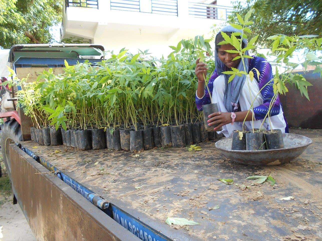 Preparing samplings for planting