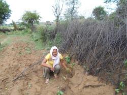 Gulab planting her saplings
