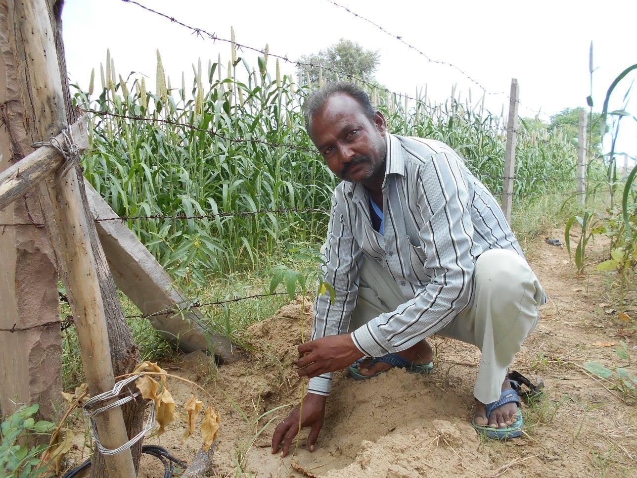Hari Shankar with his saplings