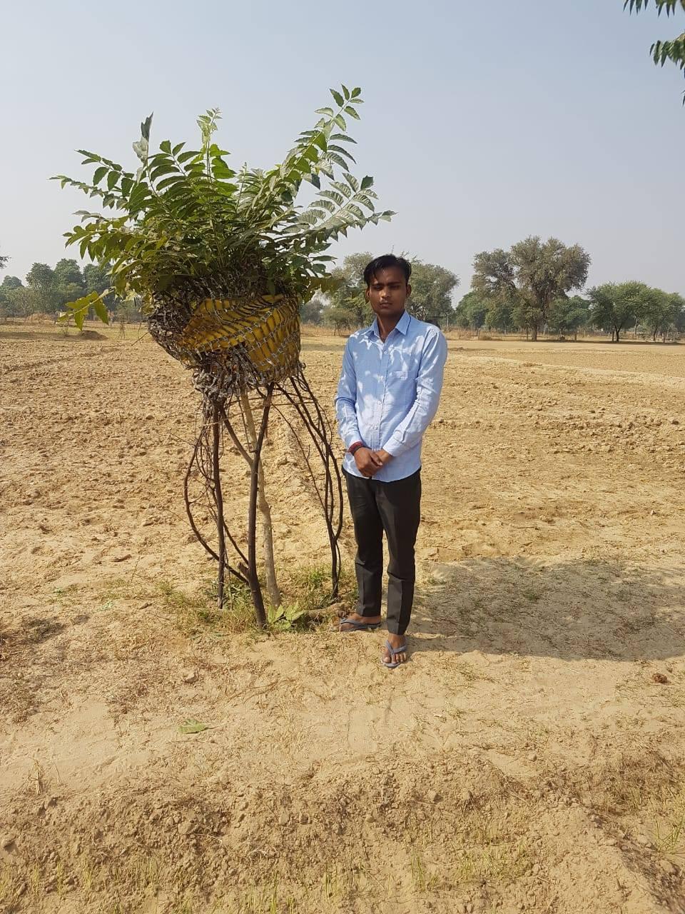 Ardu tree planting complete