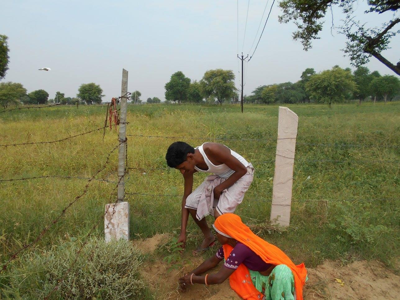 Sugna and Vinod planting