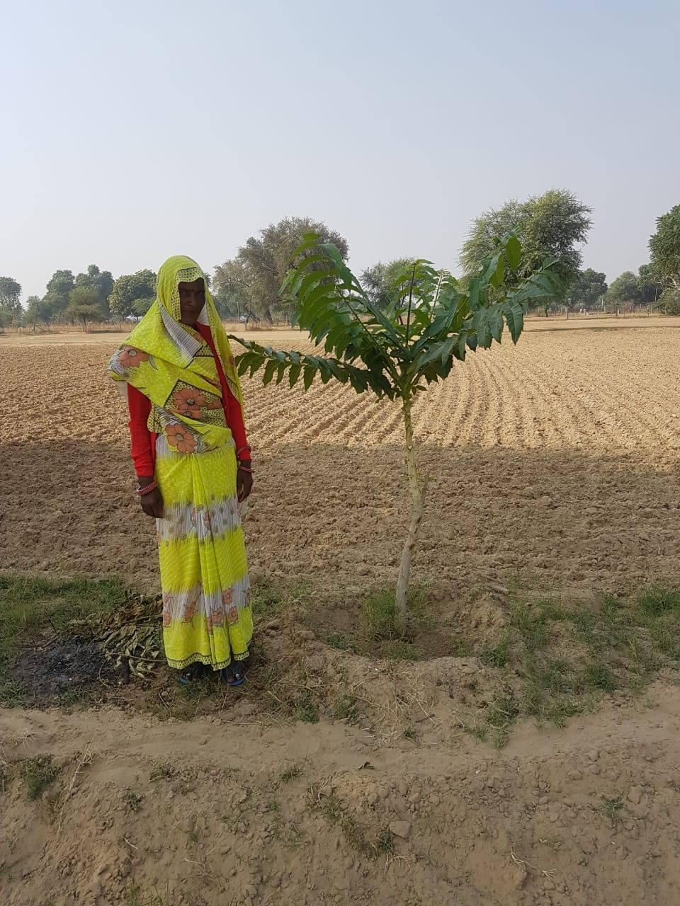 Ardu tree on farmer's plot of land