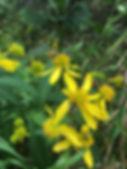 bees pollinating.JPG