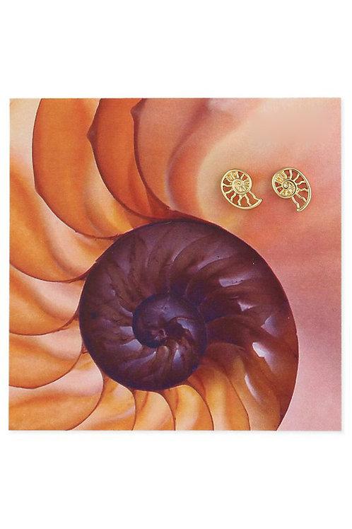 Sea Shell Stud Earrings
