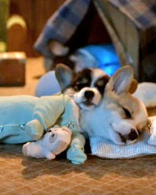 doggie sleepover.jpg
