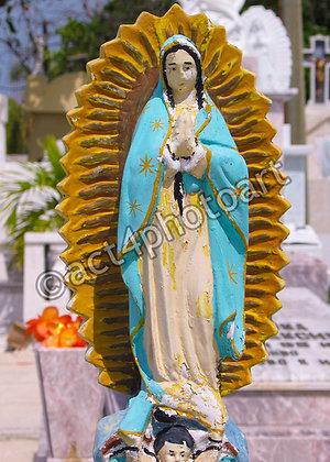 Guadalupe #35