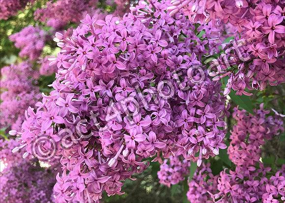 Petals & Perfume