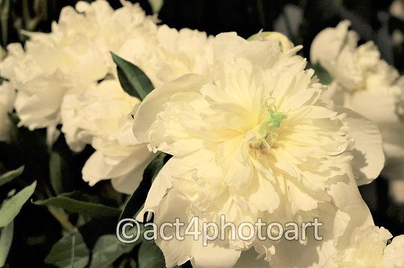 Cream Ornament