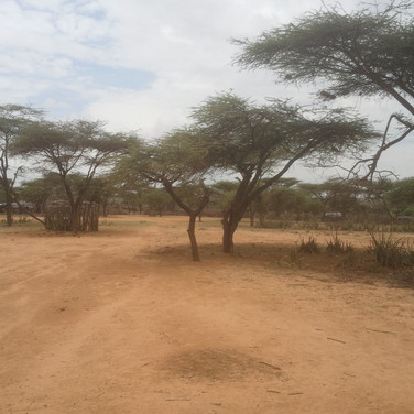 Current school (under the tree), evidence of elephant damage and insecure location