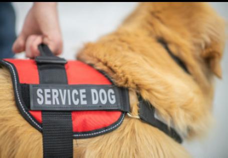 service dog photo close.png