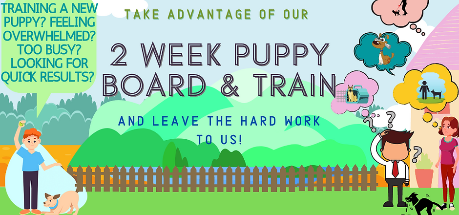 puppy board and train.png