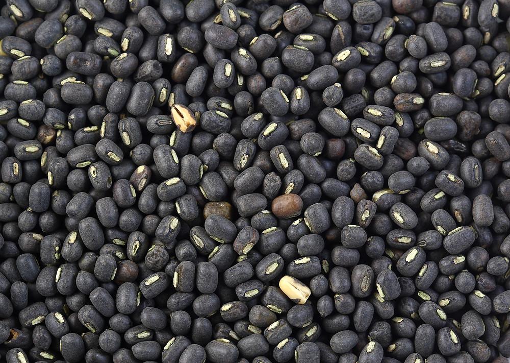 Black urad dal beans