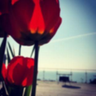 poppy.jpeg