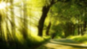 green_nature_sunlight_1920x1080.jpg