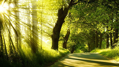 green_nature_sunlight_1920x1080.jpg