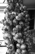 Anna Mackenzie, garlic