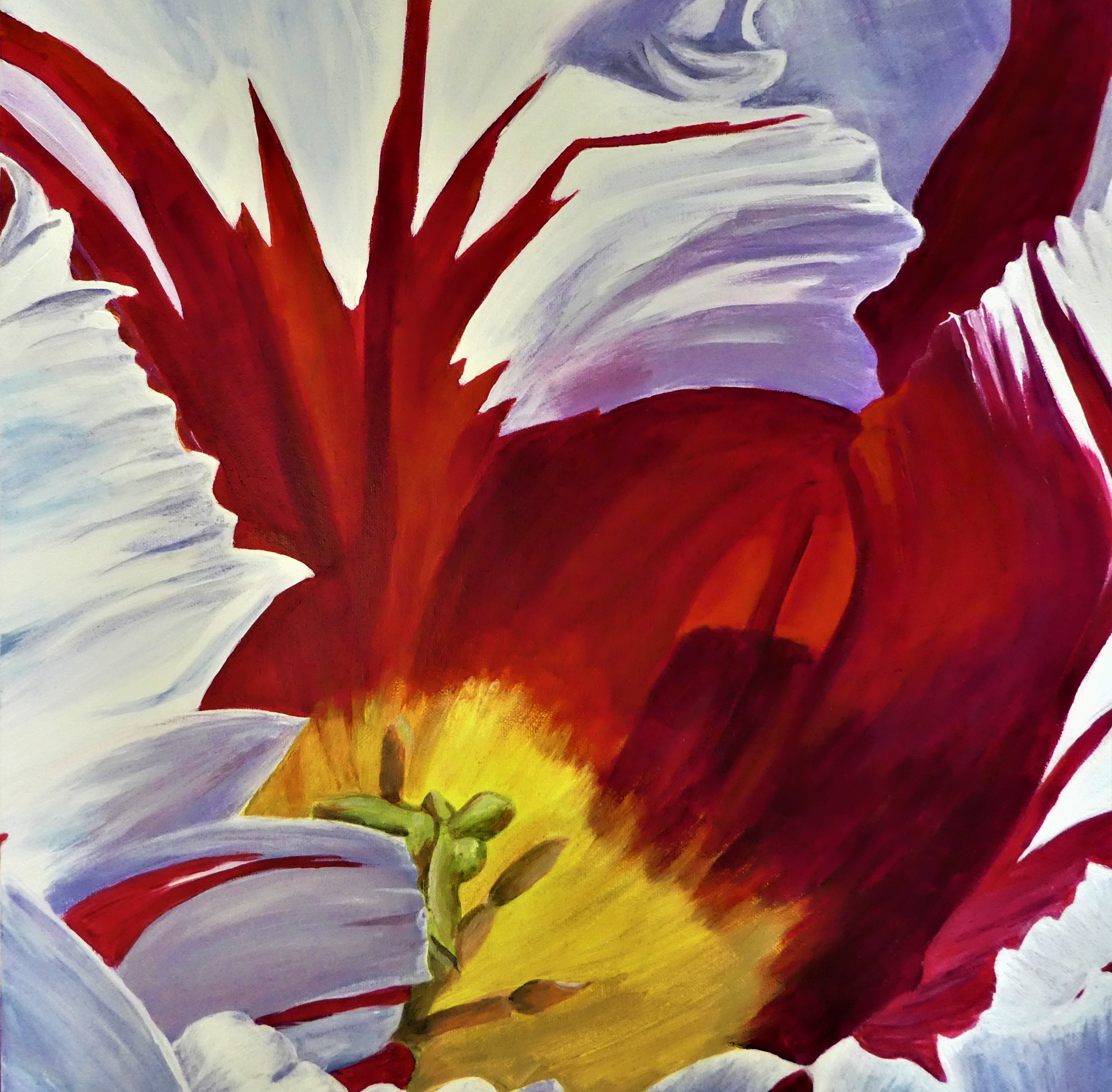 Red and White Tulip by Audrey Bowlin