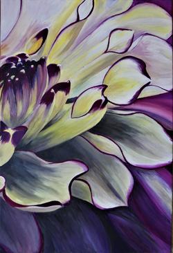 Purple Yellow Dahlia p