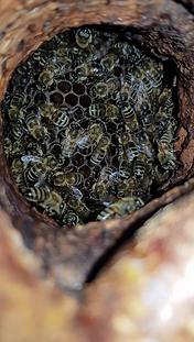 Beekeeping rEvolution