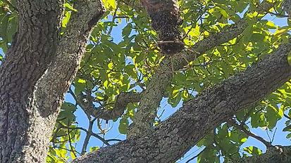 bees amd birds