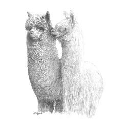 Alpacas Screen Print