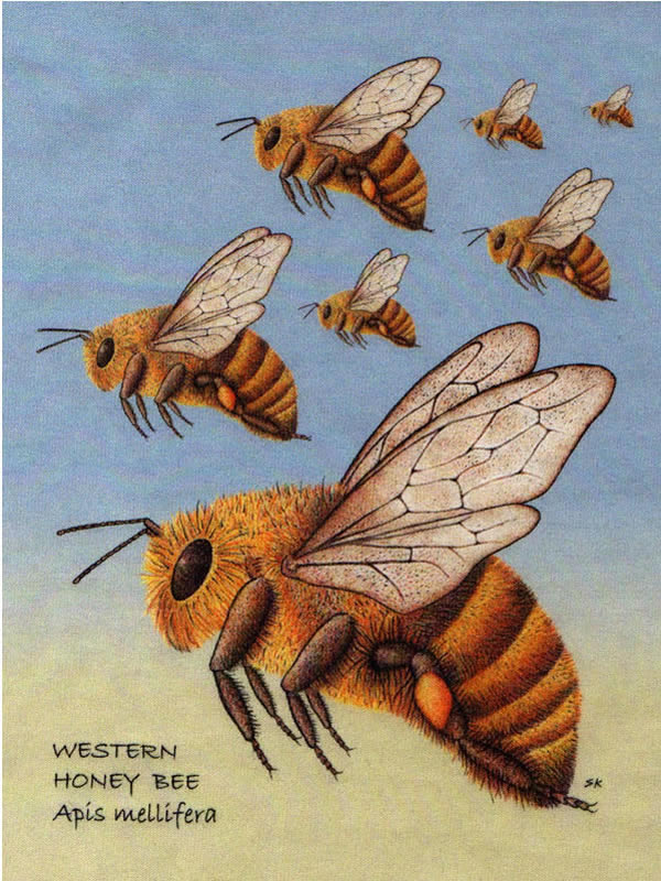 Honey Bee Digital Garment Print
