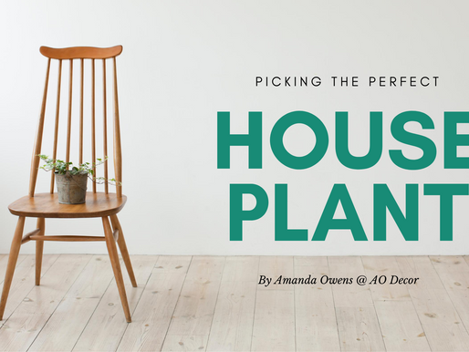 Picking the Perfect Houseplant