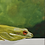 Thumbnail: Tree Frog on Mounted Canvas