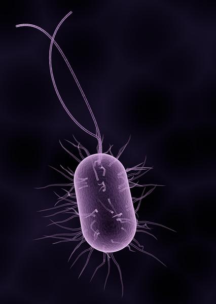 bacteria_edited_edited_edited.png
