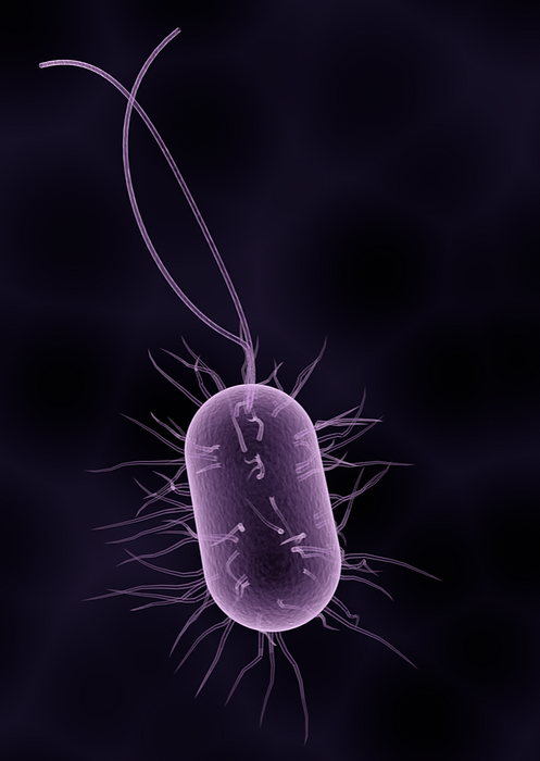 bacteria_edited_edited_edited.png