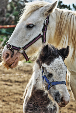 HORSE RIDING GOZO