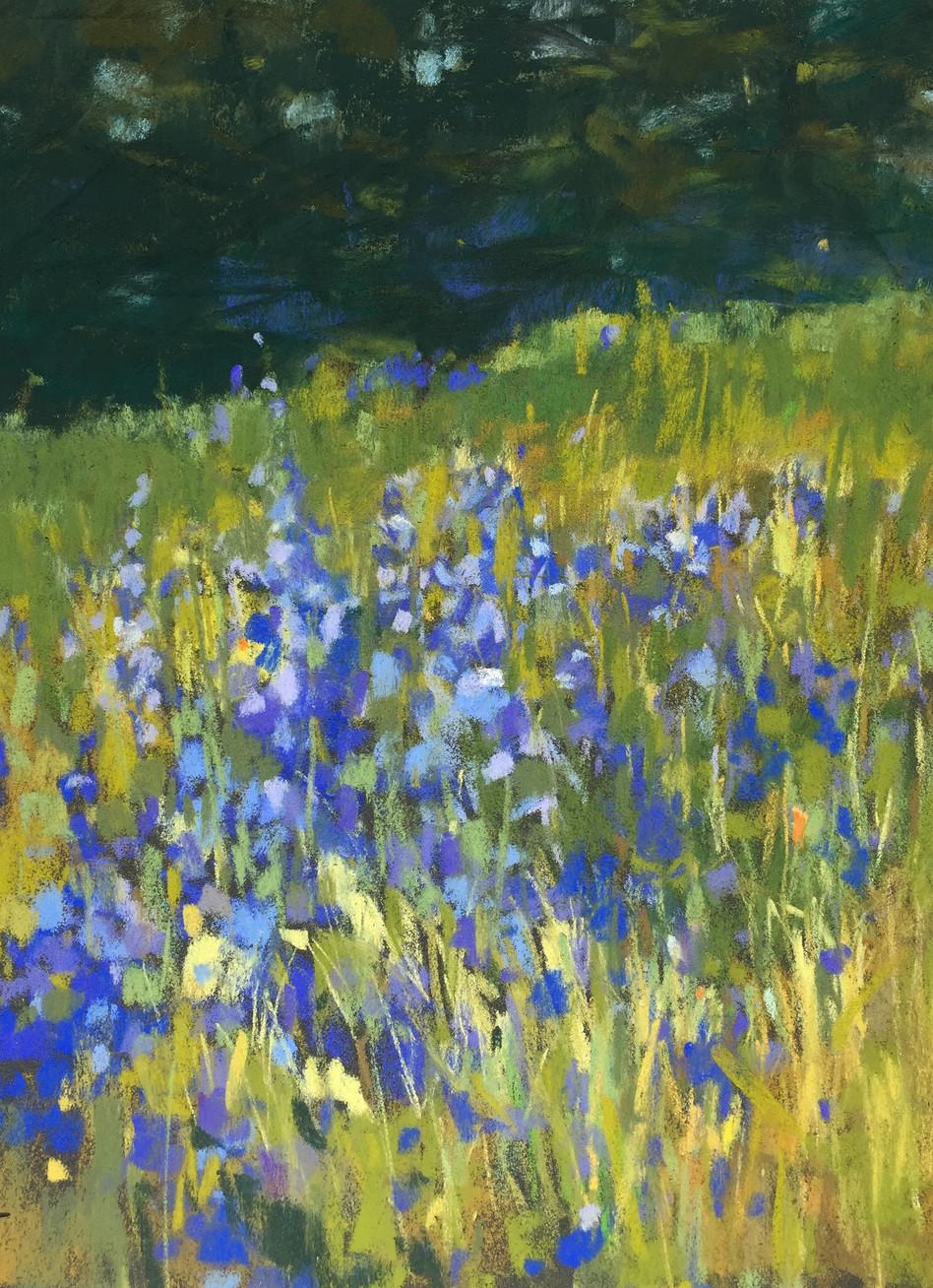 Lupine in Meadow 1.jpg
