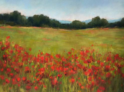 Red Poppy Field:large.jpg
